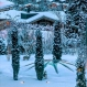 bambi, animals in the snow, winter sports and skincare